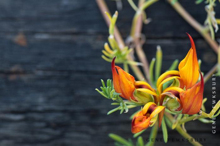 wildflower photography in Colorado