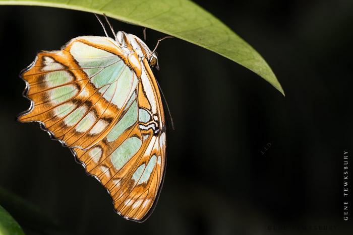 Denver butterfly pavilion macro workshop