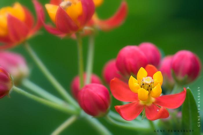 Macro flower photography workshops